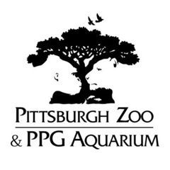 Pittsburgh Zoo & PPG Aquarium: See the gorilla and lioness (in white) facing each other?
