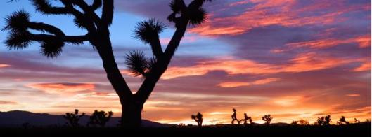 Joshua Tree National Park in California (Photo from Joshua Tree National Park)